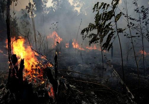 جنگلهای زاگرس جولانگاه آتش/ بوقهای بی پایان پاسخ جدید مسئولان به پیگیریها