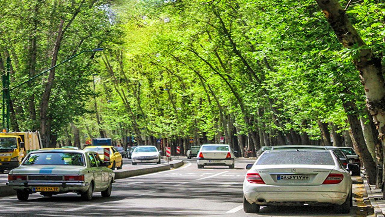 جایگزینی بیش از ۳ هزار درخت چنار در خیابان، ولی عصر