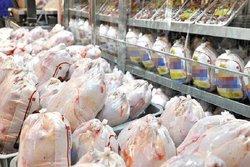 عرضه مرغ در کشتارگاهها کاهش نداشته است