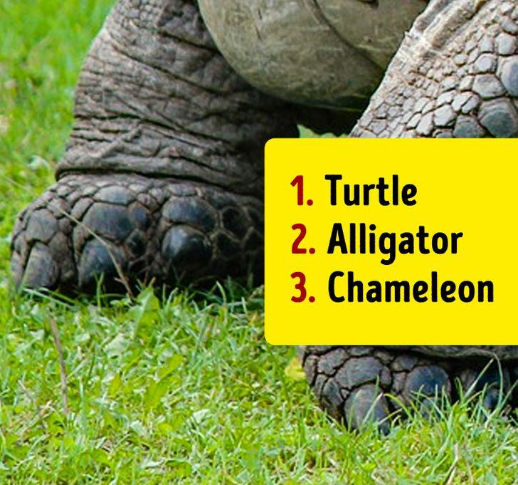 تست هوش: با دیدن پاهای حیوانات، بگویید دقیقاً چه حیواناتی را در تصویر میبینید