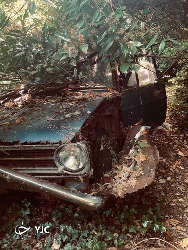 پیداشدن خانه عجیب مخروبه در دل جنگل!