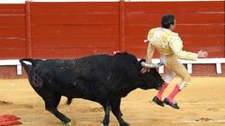 غافلگیری گاوباز اسپانیایی توسط یک گاو!