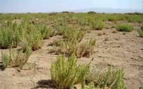 ۶۵ هزارهکتار از اراضی استان همدان در آستانه بیابانی شدن