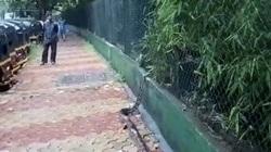 شوکه شدن افراد محلی با دیدن پیتون غول پیکر در پیاده رو!