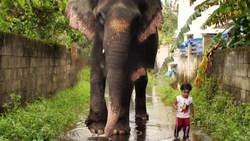 دوستی جالب کودک ۲ ساله با یک فیل + فیلم