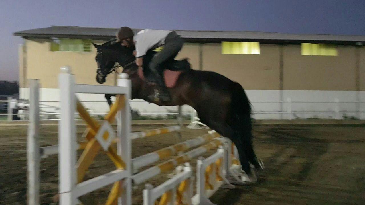 سواركار مراغه ای مقام اول رقابت هاي پرش با اسب جام غدیر خم را كسب كرد