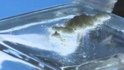 تهیه مواد مخدر در کمتر از چند دقیقه! + فیلم