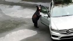 فراری دادن خرس با جیغ! + فیلم
