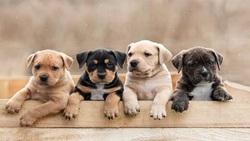 جمعه بازار سگهای اشرافی در حاشیه پایتخت/ از نژاد ۷۰ میلیون تومانی تا موردی که از رژیم ماست پیروی میکند!