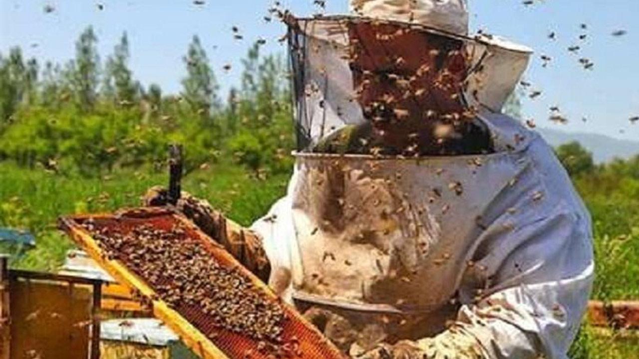 زنبورداران