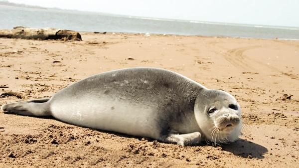 ساحل خواری تهدید جدی برای آینده دریای خزر
