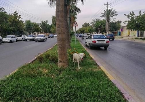 سگ ولگرد در حال پرسه زدن در خیابان های شهر