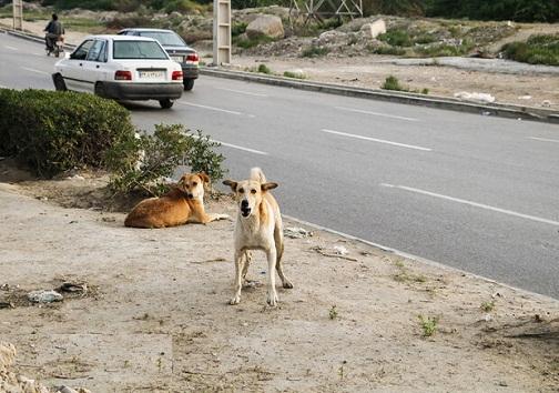 سگ ولگرد در حال حمله به انسان