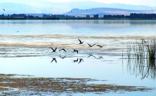 فرود بیش از ۴ هزار قطعه پرنده در تالابهای نقده