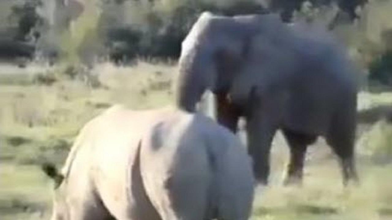 شگرد فیل