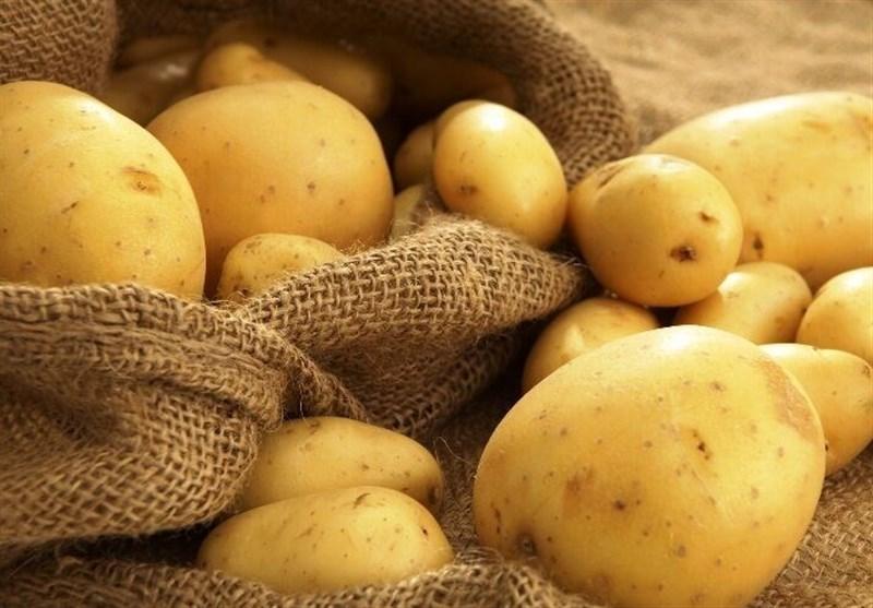 پیش بینی برداشت ۹۳۰ هزار تن سیب زمینی از مزارع استان همدان
