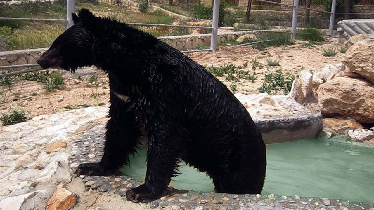 آیا محیط زیست از سرمایه گذاران در باغ وحش شیراز حمایت می کند؟