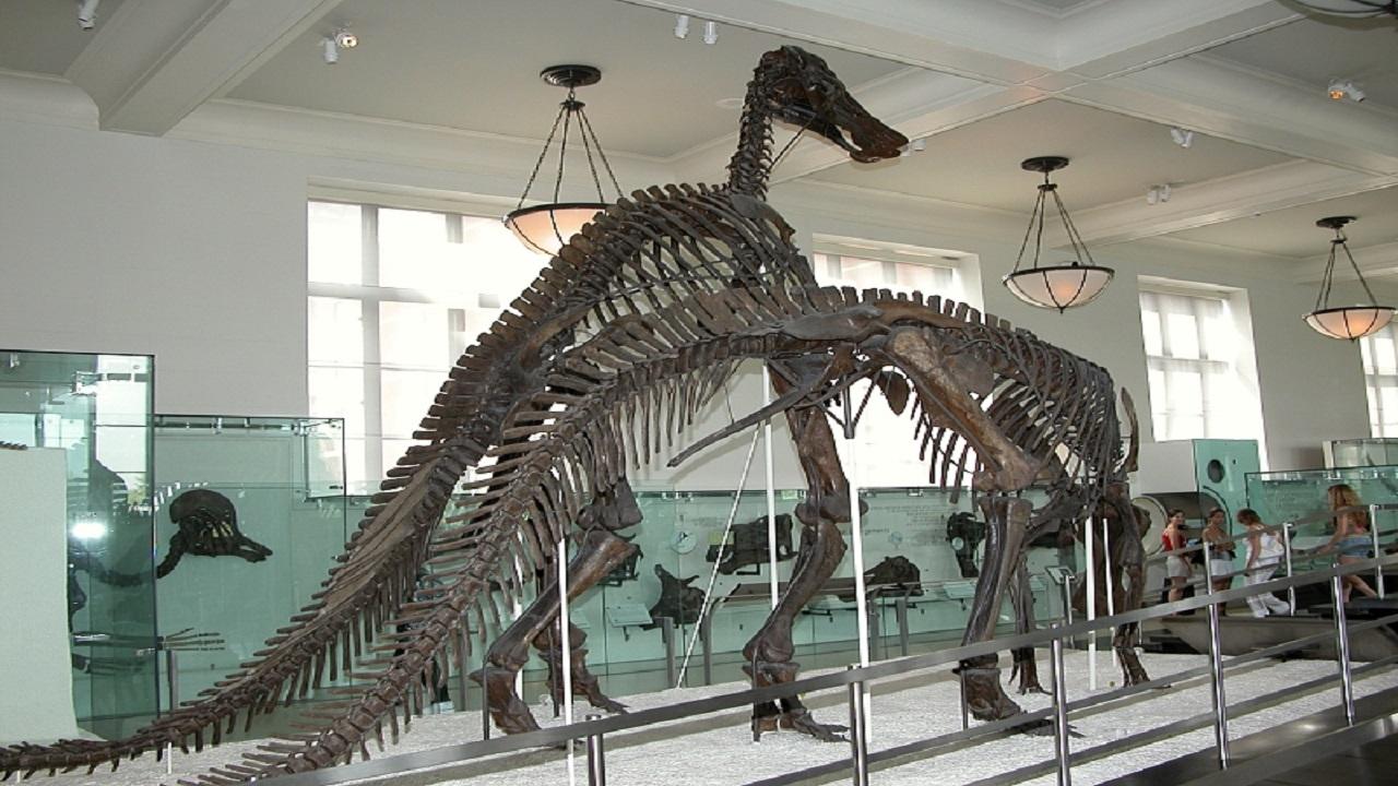 استخوانهای بزرگترین دایناسور جهان را در کجا ببینیم؟