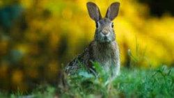 واکنش حیرت آور خرگوش برای فرار از چنگال عقاب + فیلم