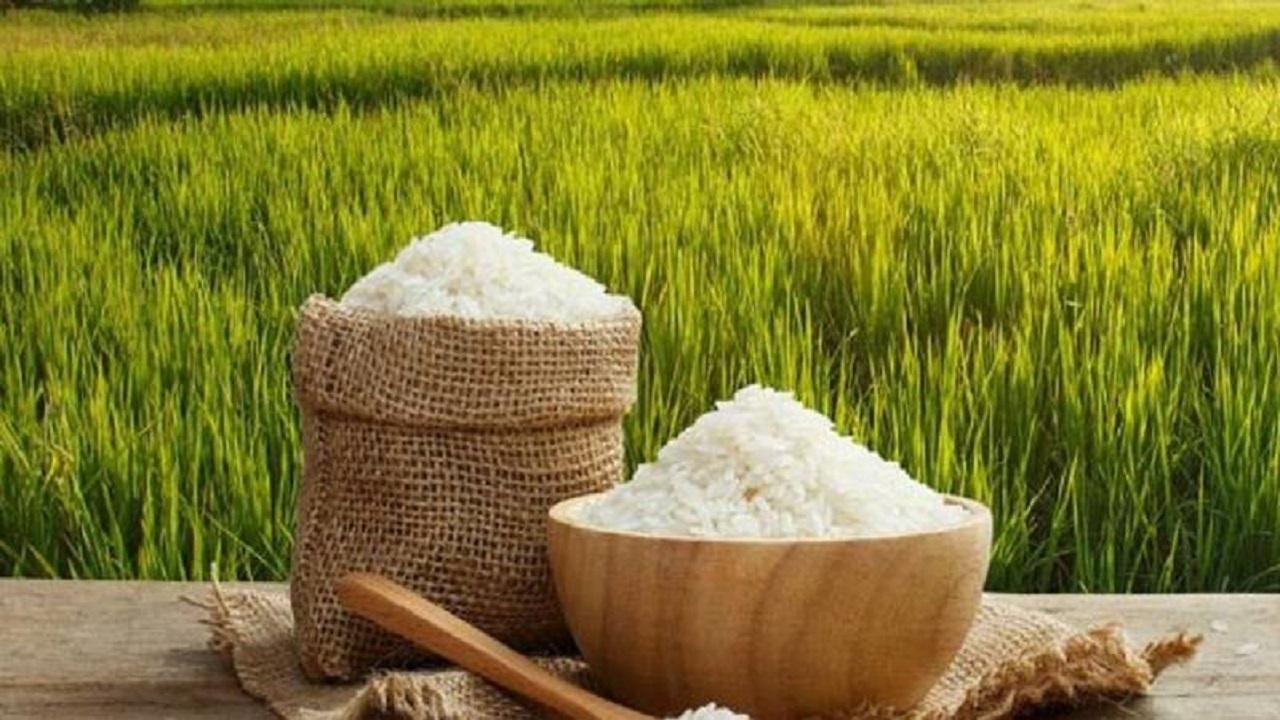 هر کیلو برنج در بازار چند؟