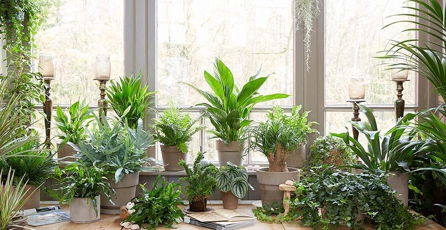کدام گیاهان دور کنندههای طبیعی حشرات هستند؟