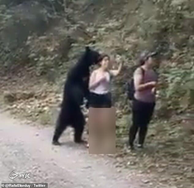 لحظه سلفی ناخواسته با خرس غول پیکر!