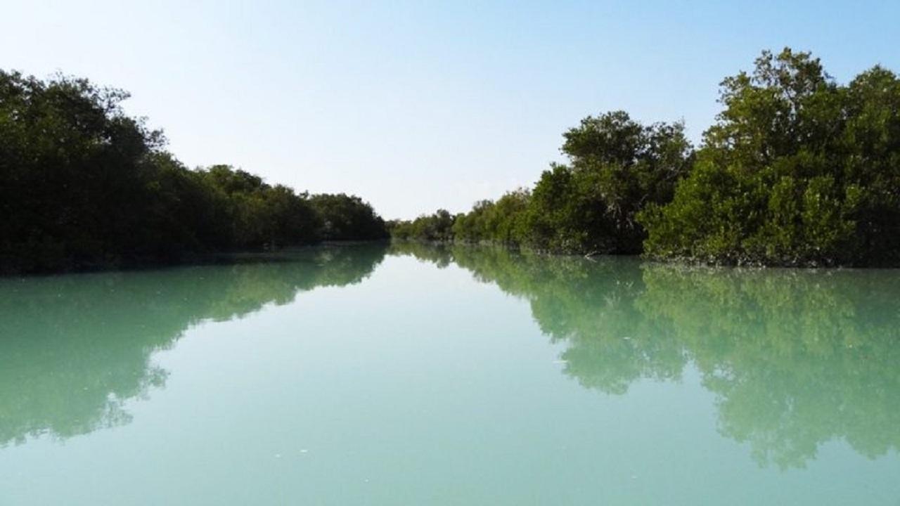 ورود آلایندهها و ساحلسازی تهدیدی برای جنگلهای حرای بوشهر