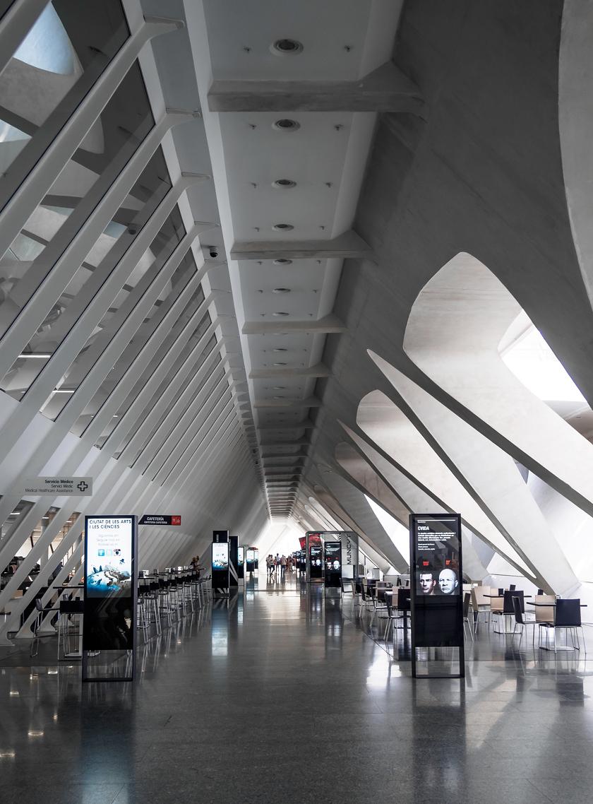 موزهای به شکل اسکلت نهنگ+تصاویر