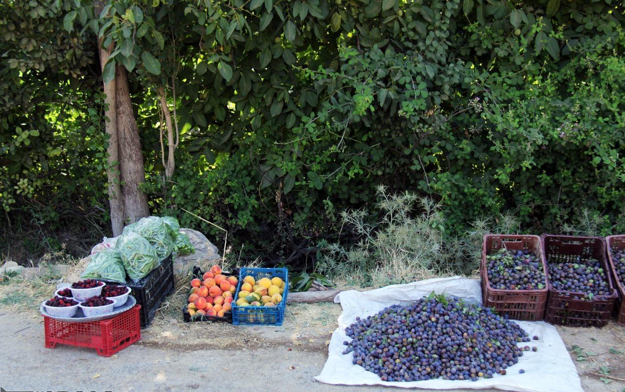 میشخاص، خوش مزهترین روستای استان ایلام/ زردآلوهایی که توریست جذب میکنند