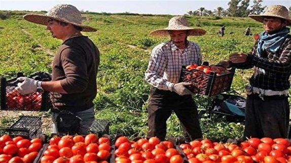 باشگاه خبرنگاران - دلالان چگونه درآمد کشاورزان را می بلعند؟