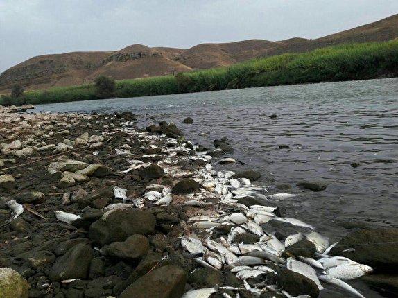 باشگاه خبرنگاران - صدها قطعه ماهی با شوک الکتریکی تلف شدند