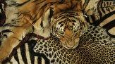 باشگاه خبرنگاران - برخورد سازمان محیط زیست با قاچاق حیات وحش