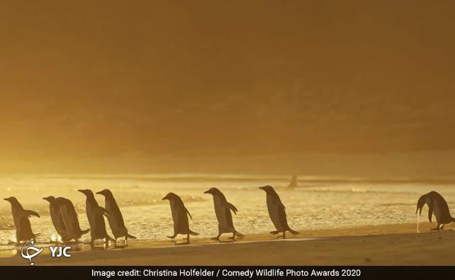 تصاویر کمدی برتر حیات وحش در سال ۲۰۲۰