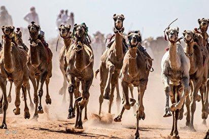 مسابقات شتردوانی - مصر
