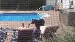 پاره شدن چرت صاحبخانه توسط خرس سرگردان!