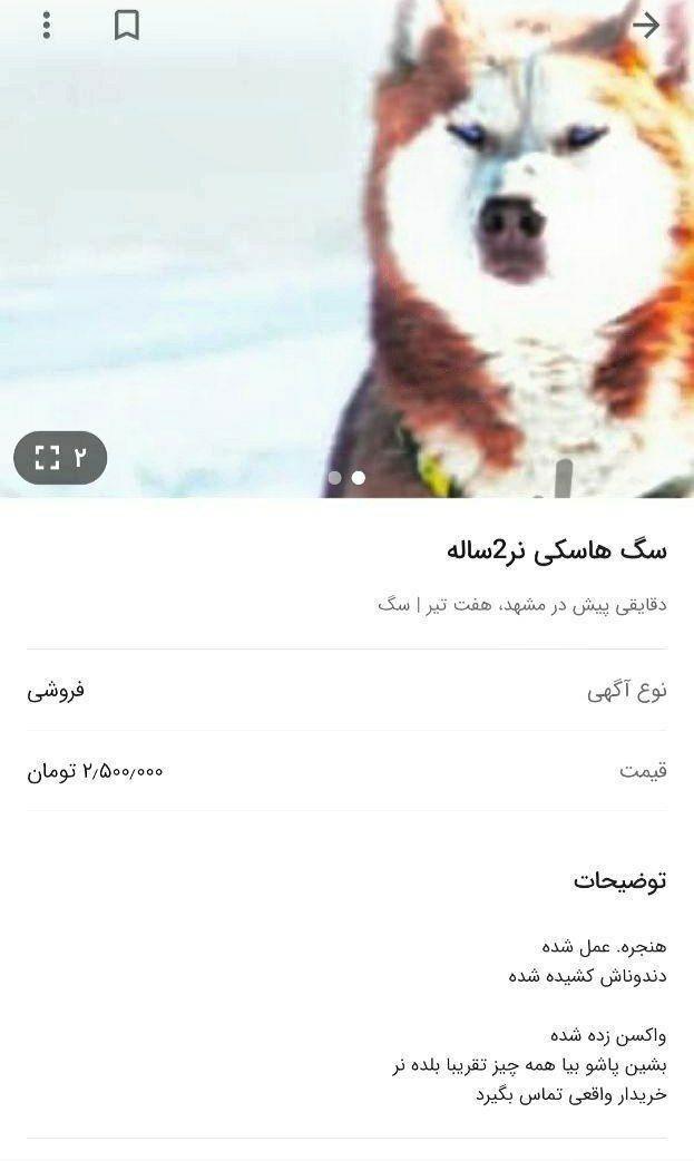 حیوان آزاری در ایران