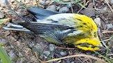 باشگاه خبرنگاران -مرگ ناگهانی صدها پرنده مهاجر در آمریکا+ تصاویر