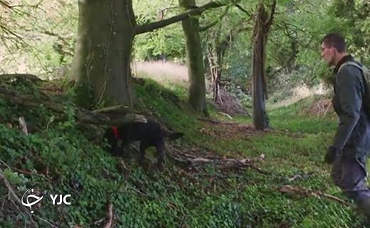 استفاده از سگ های آموزش دیده برای یافتن قارچ ترافل در آلمان