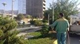باشگاه خبرنگاران - سمپاشی بوتهها و درختان در سطح شهر ایلام