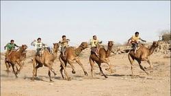 عادیسازی روابط با رژیم صهیونیستی به شترهای امارات هم سرایت کرد!