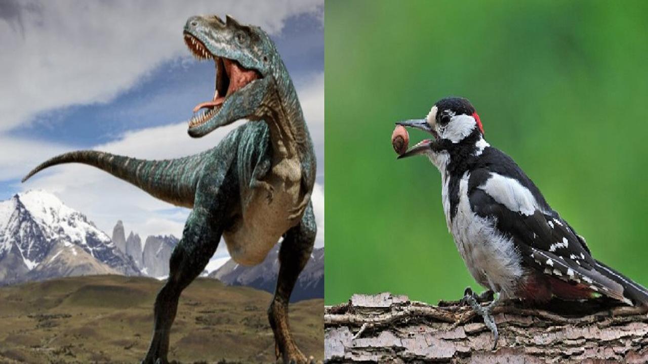 چرا دایناسورها منقرض شدند، اما پرندگان زنده ماندند؟