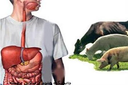 شیوع بیماری باکتریایی در چین بر اثر خطای آزمایشگاهی