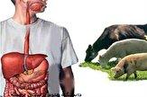 12610122 230 شیوع بیماری باکتریایی در چین بر اثر خطای آزمایشگاهی