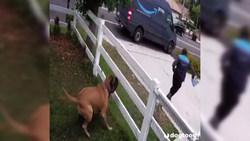 فرار دیدنی یک مرد از دست سگ خانگی + فیلم