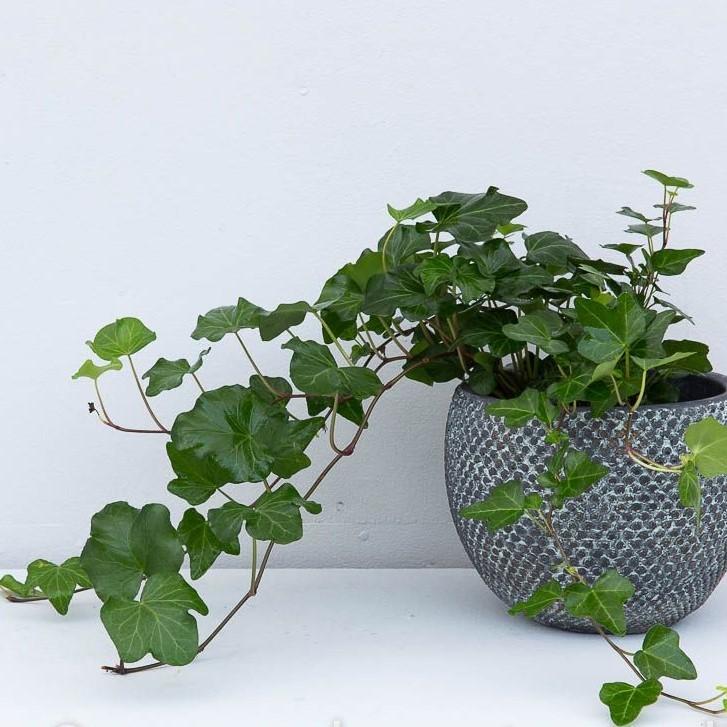 دو پیشنهاد عالی برای نگهداری از گیاهان آپارتمانی در محیطهای کم نور