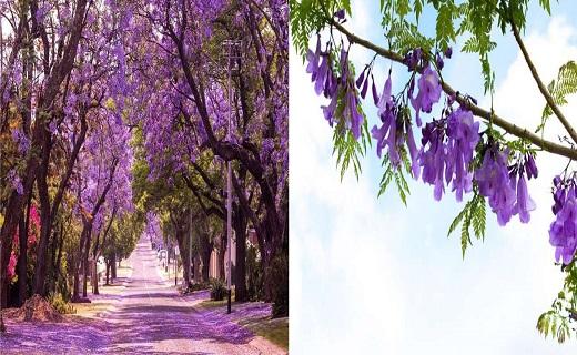 درختان چشمنوازی که در عین زیبایی، عجیب و شگفتانگیز هستند