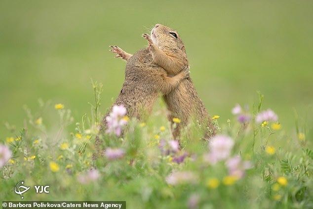 تصاویری جالب از لحظه درآغوش کشیدن یکدیگر حیوانات!