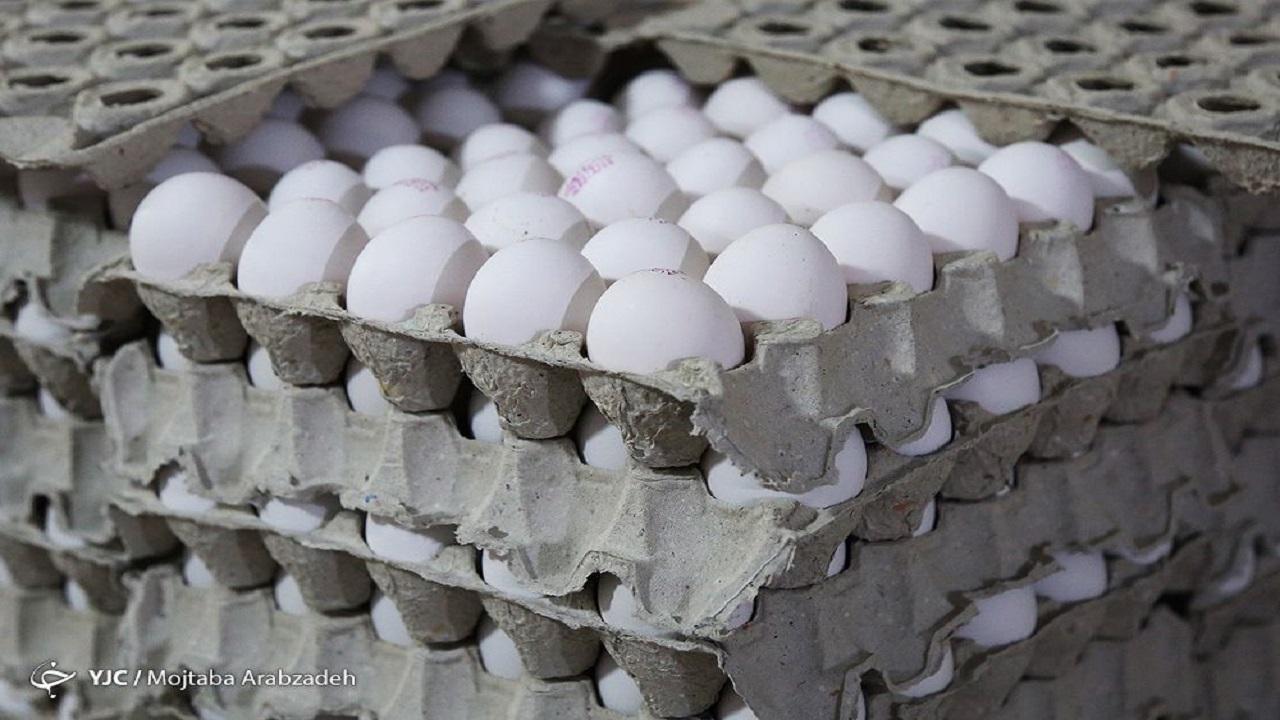 12709039 246 » مجله اینترنتی کوشا » صادرات، نقشی در گرانی تخم مرغ ندارد 1