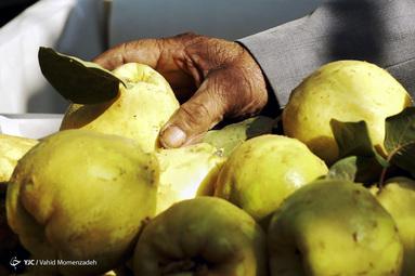 واردات گلابی از شایعه تا واقعیت/ میوه های ورود موقت سر از بازار داخل درآورد/ دست های پشت پرده در واردات گلابی/ اختصاص ارز نایاب به واردات گلابی