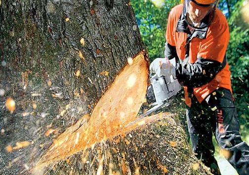 نیشکر بکارید، کاغذ برداشت کنید/ وقتی تفالههای نیشکر پیش مرگ درختان میشوند